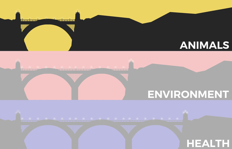 Bridge the shortest distance